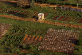 Aerial view of the terraced Vegetable Garden, the Northeast Vineyard, and Berry Squares