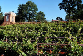 Northeast Vineyard